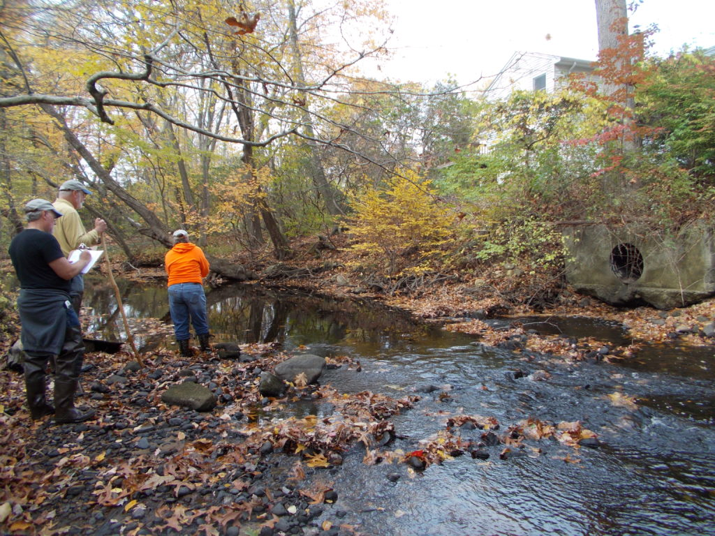Stream Walk volunteers assess a stormwater outfall to Latimer Brook.