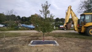 A tree filter installed at the CT DEEP Mago Point (Waterford) overflow parking lot.
