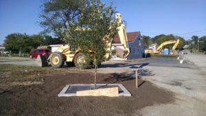 A tree filter installed along Mago Point Way at the CT DEEP overflow parking lot on Mago Point.
